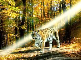 Wildlife Animal Desktop Wallpapers ...