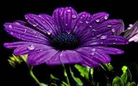 Dew Drops Flowers Wallpaper #6991069