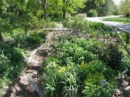 Texas Shade Garden Design A Native Shade Garden Dyck Arboretum