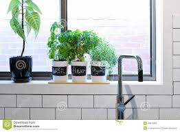 Kitchen Window Shelf Pots Of Herbs On Contemporary Kitchen Window Sill Stock Photo