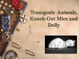 Transgenic Animals Ppt Transgenic Animals Knock Out Mice And Dolly