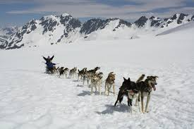 alpine air alaska alaska summer glacier dog sled tour what fun experiencing the sport