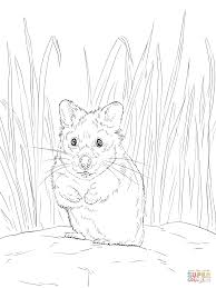 Cute Hamster Color By Number Free Printable Coloring Pages At