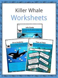 Killer Whale Orca Facts Worksheets Habitat Life Cycle