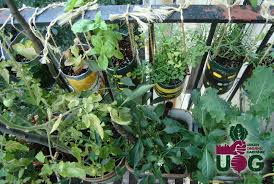 learn how to start your apartment garden and maximize your small space