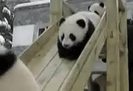 baby panda gif. Simple Panda Playing Baby Panda GIF Throughout Gif Giphy
