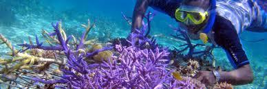 Barrier Reef Coat Rack Discovering LifeSaving Medicines in Coral Reefs KCET 50