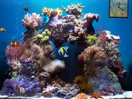 animated aquarium wallpaper for windows 7 free. Brilliant Free Beautiful Reef 3D Aquarium Animated Wallpapers Intended Wallpaper For Windows 7 Free A
