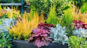 design essentials for container gardens