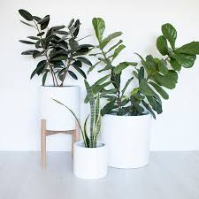 Appealing White Indoor Plant Pots 95 For Your Home Decor Ideas With White Indoor  Plant Pots