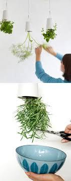 Kitchen Garden Herbs 17 Best Images About Kitchen Garden On Pinterest Gardens