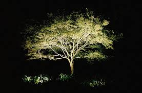 lighting outdoor trees. Landscape Tree Lighting Home Design Ideas And Inspiration Outdoor Trees