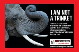 animal cruelty ads.  Cruelty Stop Wildlife Crime For Animal Cruelty Ads