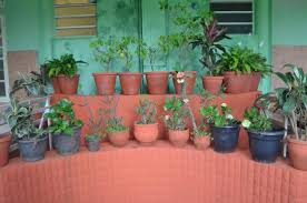 a small indoor garden picture of