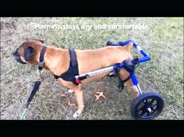 dog wheelchairs for dachshunds other small dogs how to make a wheelchair wheels bathroom break back