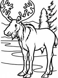Small Picture Cute Moose Coloring Pages GetColoringPagescom
