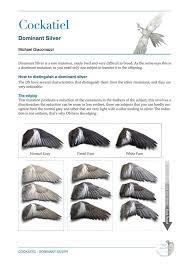Cockatiel Chart Cockatiel Colour Mutations Wing Diagram Parrot Wings