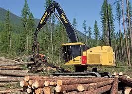Logging & Sawmilling Journal November 2013 - Life after the beetle