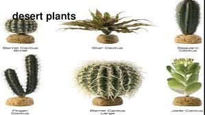 desert plants with names. Interesting Names Beautiful Desert Plants With Names  Photo18 Inside Desert Plants With Names T