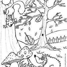 Coloring Pages Forest Animals Squirrel And Hedgehog Coloring Pages Hellokids Com
