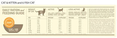 Kitten Feeding Chart How Much To Feed A Kitten Based On Age Complete Guide