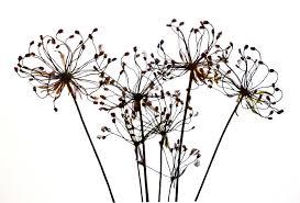 Free Images : nature, branch, plant, flower, dry, decoration, line ...