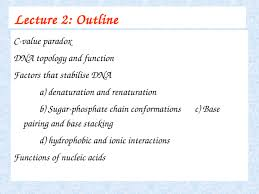 Lecture 2 Properties And Functions Of Nucleic Acids Bb10006