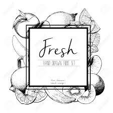 ベクトル境界線の新鮮な果物のイラストを刻印バナナキウイピーチレモンオレンジライム手書き