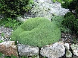 Rock Garden Design Ideas Delectable Rock Garden Of Rock Garden Images Garden Small Japanese Rock Garden