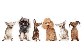 hd dogs wallpaper