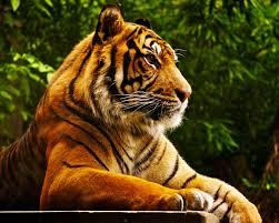 mac tiger wallpaper. Modren Mac To Mac Tiger Wallpaper