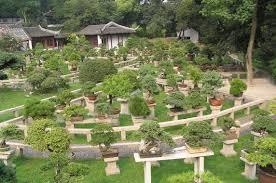 bonsai gardens. file:bonsai forest at the gardens of pagoda yunyan ta.jpg bonsai