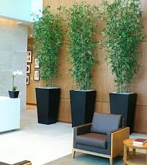 great office plants. Great Indoor Plants Cool Office Best For Men Gear Patrol . E