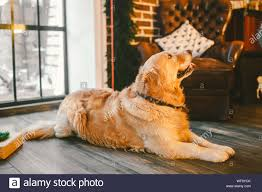 Meine mutti hat sich mit carlo unterhalten, ich hörte leise die worte: Hund Leckt Stockfotos Und Bilder Kaufen Alamy
