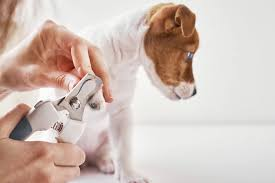 how to cut dog nails guide to t
