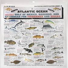 Saltwater Fish Chart Fishermans Saltwater Fish Chart 5