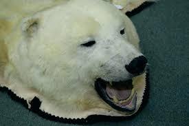 polar bear rug post with head fake foot faux fur