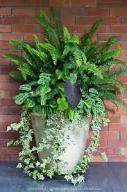 Designing Containers For Shade 360Degree View  Fine GardeningContainer Garden Shade Plants
