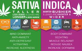 Indica Sativa Hybrid Chart Indica Sativa Cbd Thc