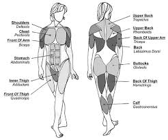 Resistance Training Muscle Group Identification And Other