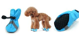 doggy socks and shoes why your dog might want them