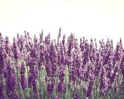 lavender wall art like this item lavender sunset wall art on lavender sunset wall art with lavender wall art like this item lavender sunset wall art