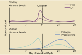 Typical Menstrual Cycle Chart 22 8 Menstrual Cycle Biology Libretexts