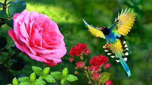 Bird wallpaper 4k, Beautiful flower ...