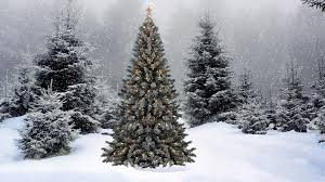 snowy christmas tree wallpaper. Unique Wallpaper Snowy Christmas Tree 2K Full HD Wallpaper Image No12 And Tree E