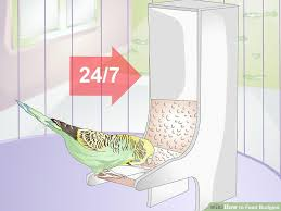 How To Feed Budgies 13 Steps With Pictures Wikihow
