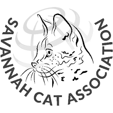savannah cat chart savannah cat price chart ranges in cost for healthy savannah