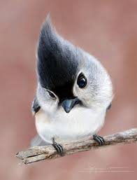 cute animal. Unique Animal 10 Cute Animal Pictures You Need To See Before Die   Pinterest Animals Beautiful Birds And Birds And