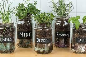 how to grow your own countertop herb garden