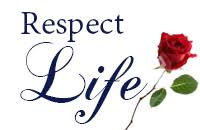 respect life essay contest saint paul the apostle catholic church  respect life rose